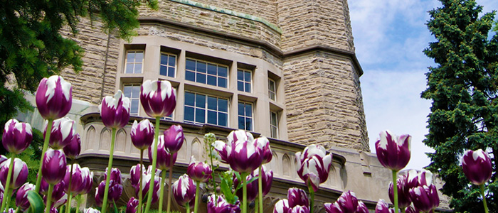 Western University, Graduate Studies - University College Tulips (Douglas Keddy)